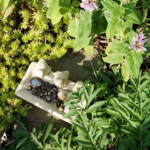 build a bee bath in the garden-min