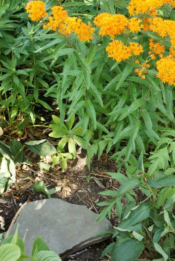 butterfly sunning spot in garden