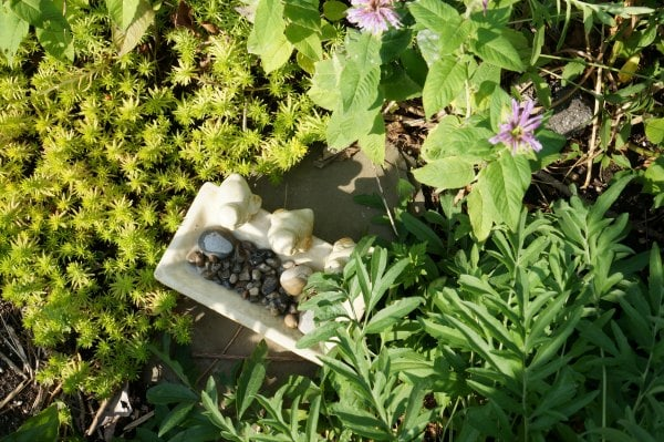 How to build a bee bath in the garden