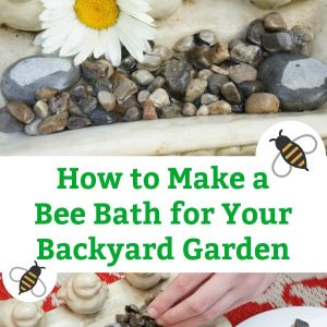how to make a bee bath for your backyard garden