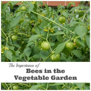 Bees in the Vegetable Garden
