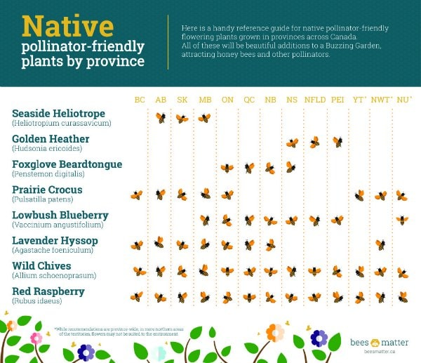 Native Pollinator Friendly Flowers