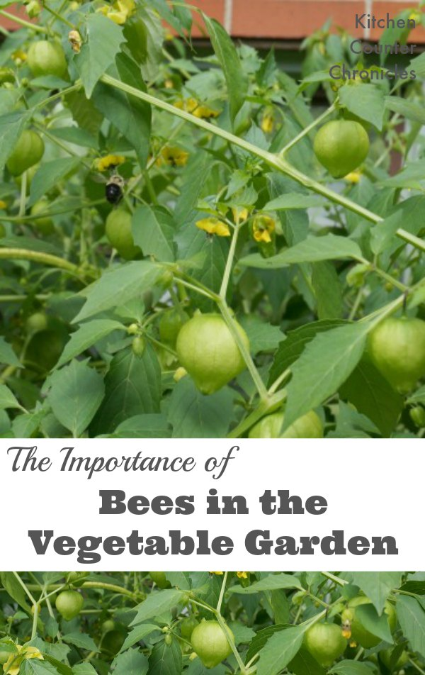 Did you know bees are just as important for crops as they are for flowers. Learn all about the importance of bees (and other pollinators) and how you grow a plentiful vegetable garden with the help of bees. | Green Living | Gardening Tips |