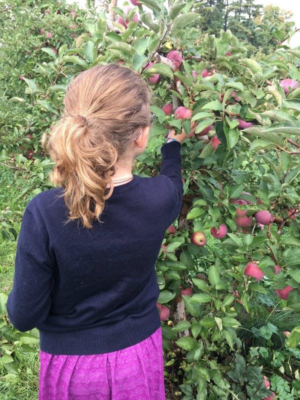 Apple Picking Trip