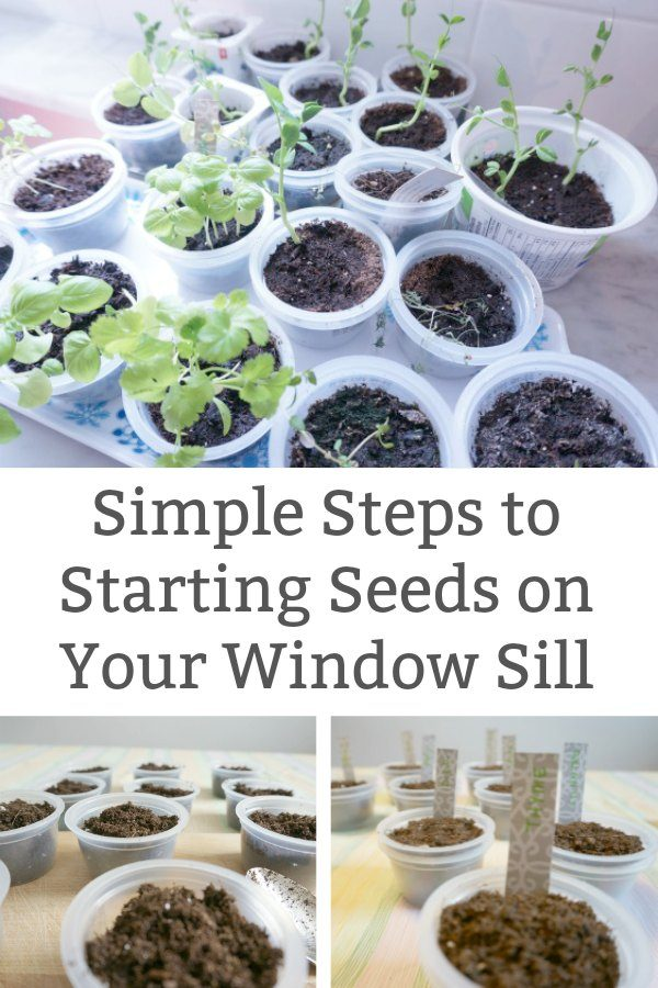 starting seeds on the window sill