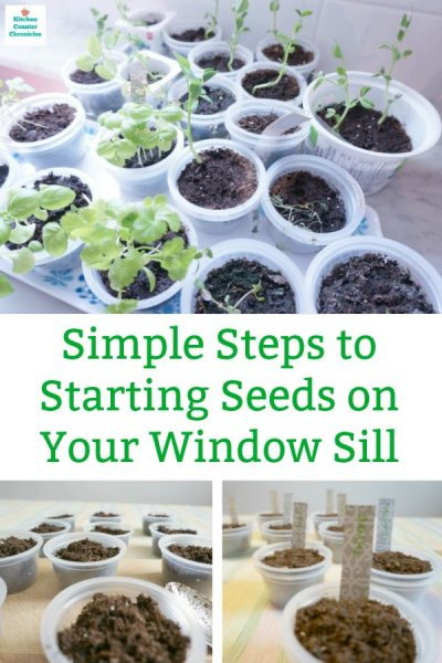 starting seeds on your window sill