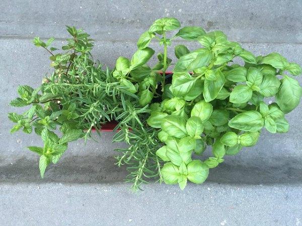 herb garden in container