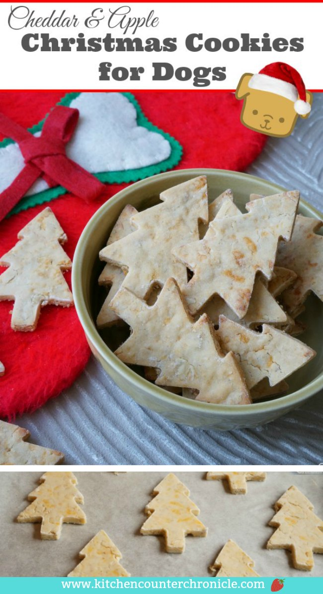 Apple and Cheddar Dog Christmas Cookies - Your dog is going to love this cheesy cookie! What dog doesn't love cheese?! #dogcookies #christmasdog #dogtreatrecipe #dogdiy