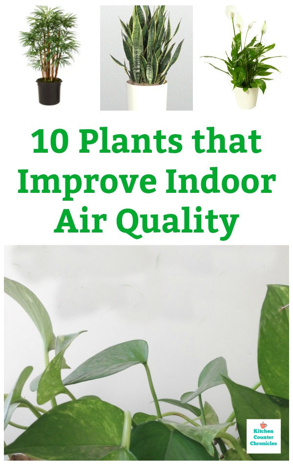 the best plants that improve indoor air quality