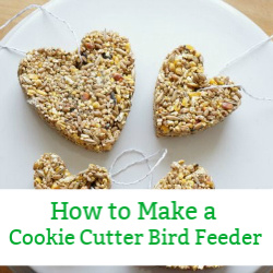 cookie cutter bird feeder popular post