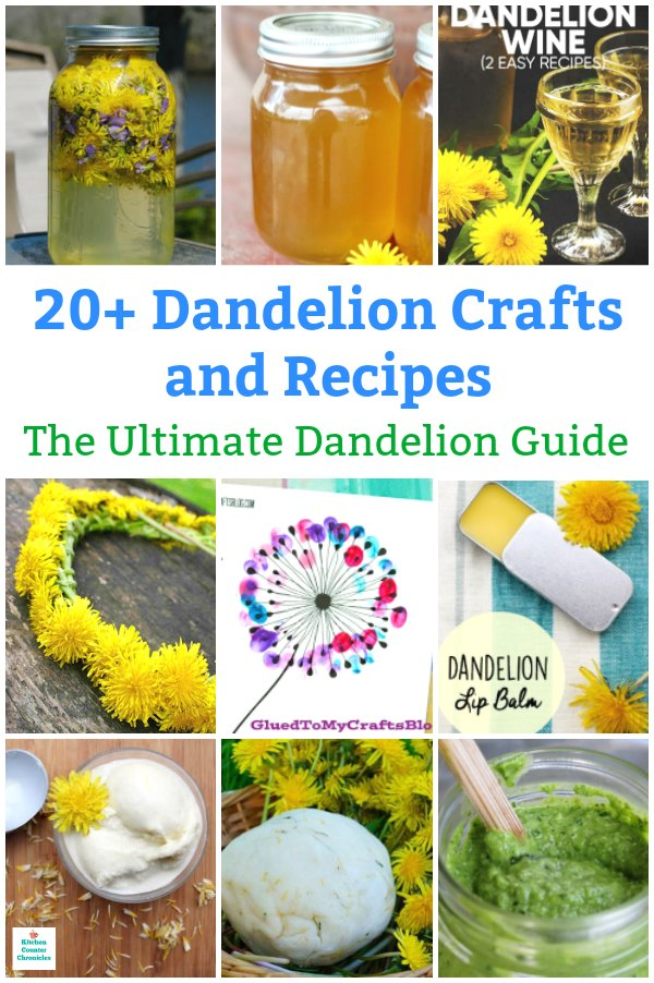 dandelion guide dandelion recipes and dandelion crafts
