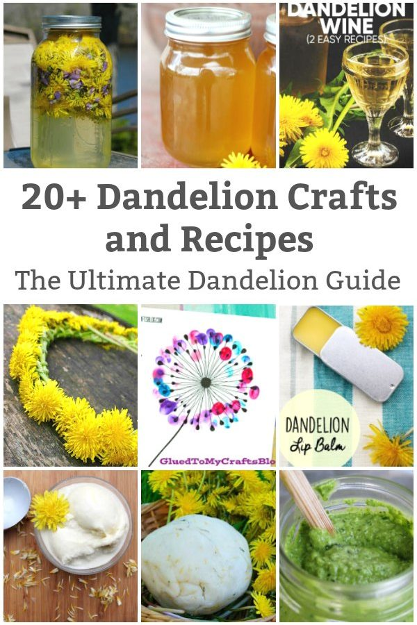 dandelion guide dandelion recipes and crafts