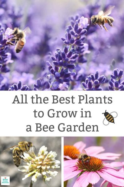 best plants to grow in bee garden