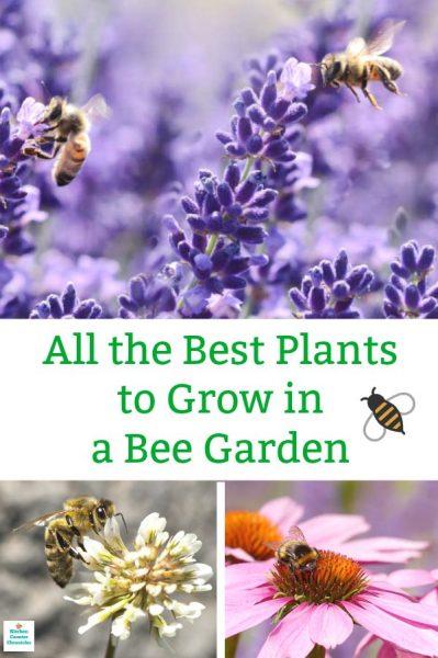 best plants to grow in a bee garden