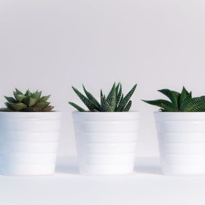 succulent plant for teen