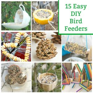 diy bird feeders to make