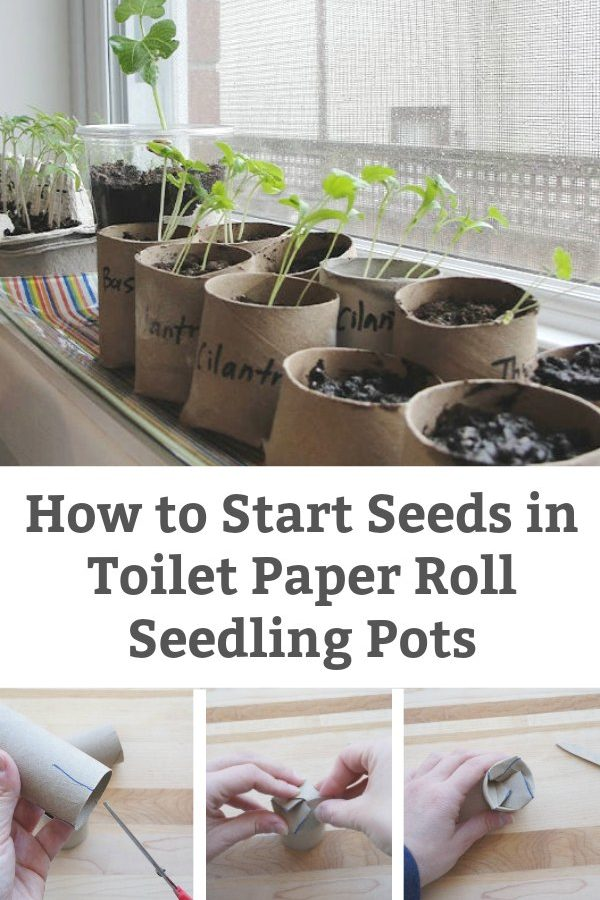 how to start seeds in toilet paper roll seedling pots