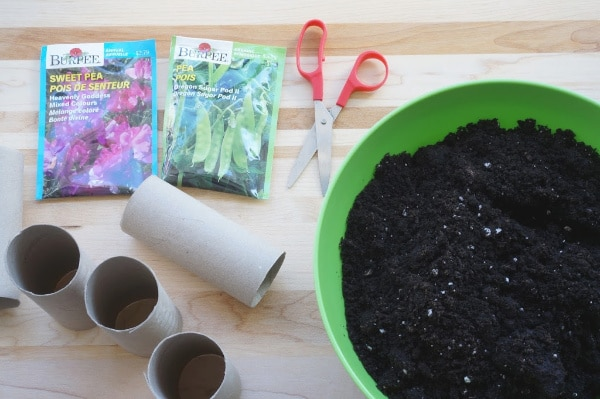 toilet paper pot for plants supplies