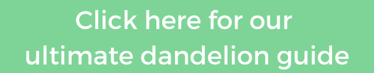 dandelion guide instagram button