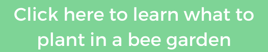 what to plant in a bee garden instagram button