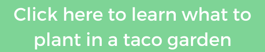 what to plant in a taco garden instagram button