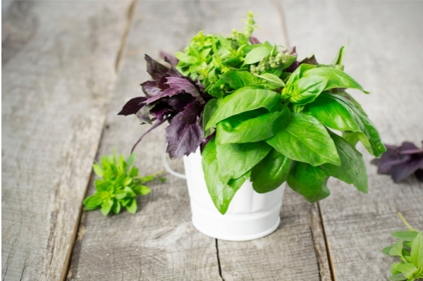 different types of basil to grow at home all in a white pot